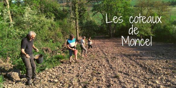 LES COTEAUX DE MONCEL